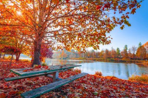 autumn-leaves-beautiful-daylight-1741696.jpg